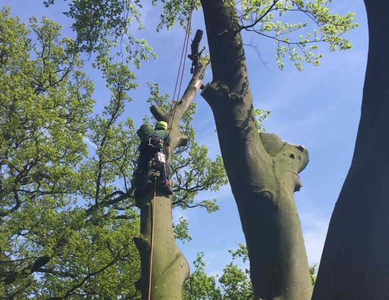 Tree Surgeon Leicester